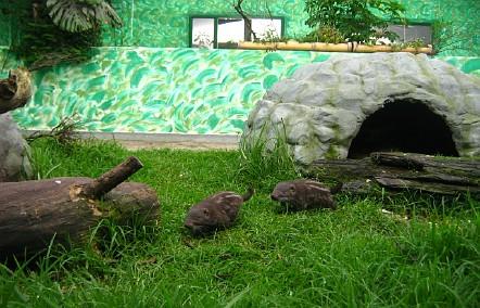 Zoo-AG Bielefeld - Arbeitsgruppe Zoobiologie: Pakarana-Projekt