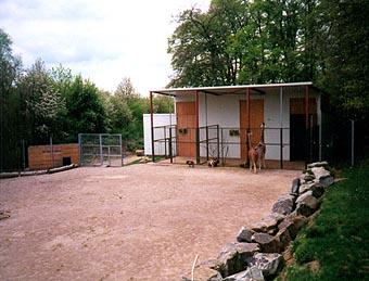 zoo ag exkursion osnabr ck 2001. Black Bedroom Furniture Sets. Home Design Ideas