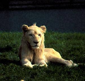Zoo ag exkursion safaripark stukenbrock 2000 for Pool blechwand